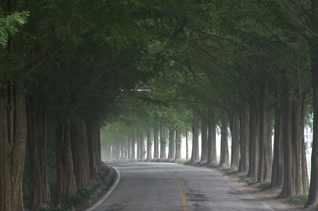 道路 街路樹